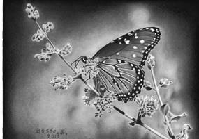 Butterfly by Torsk1