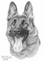 German Shepherd 2 by Torsk1
