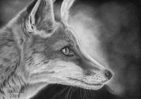 Fox by Torsk1