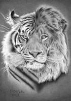 LionTiger by Torsk1
