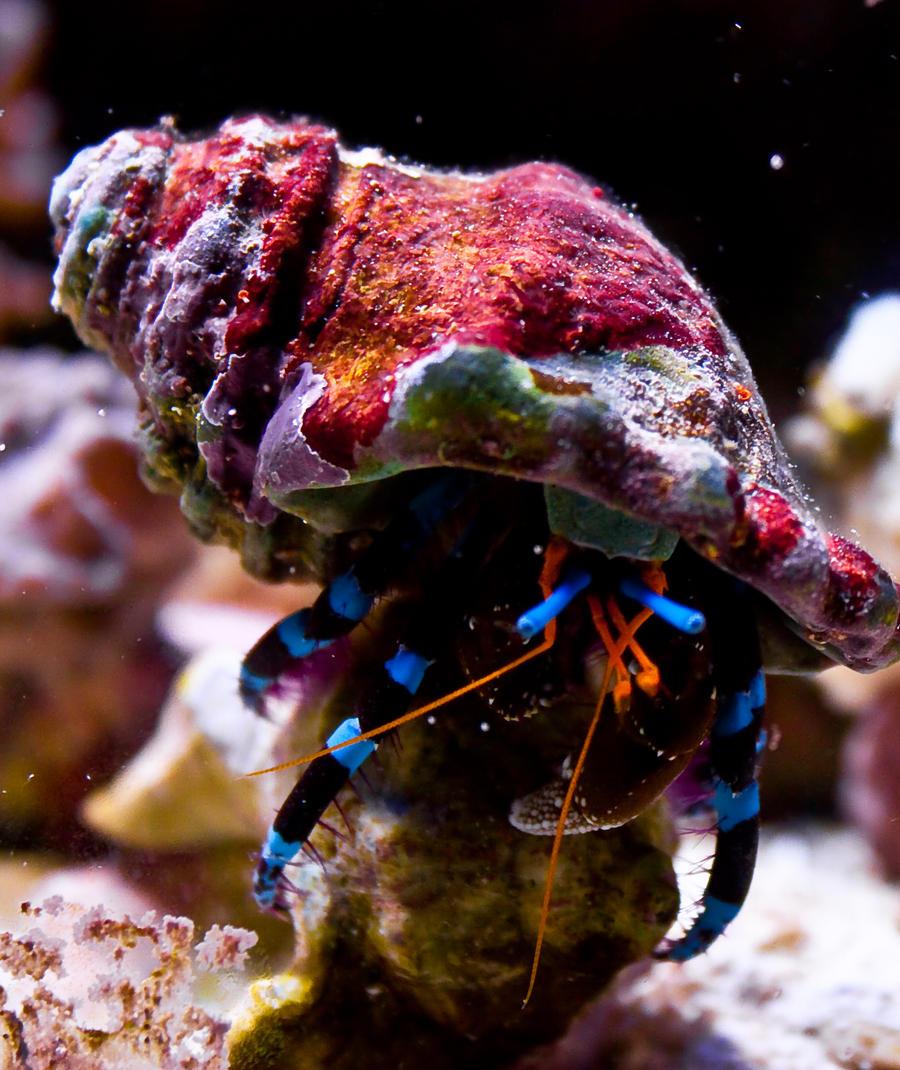 Hermit Crab by thereisnoband