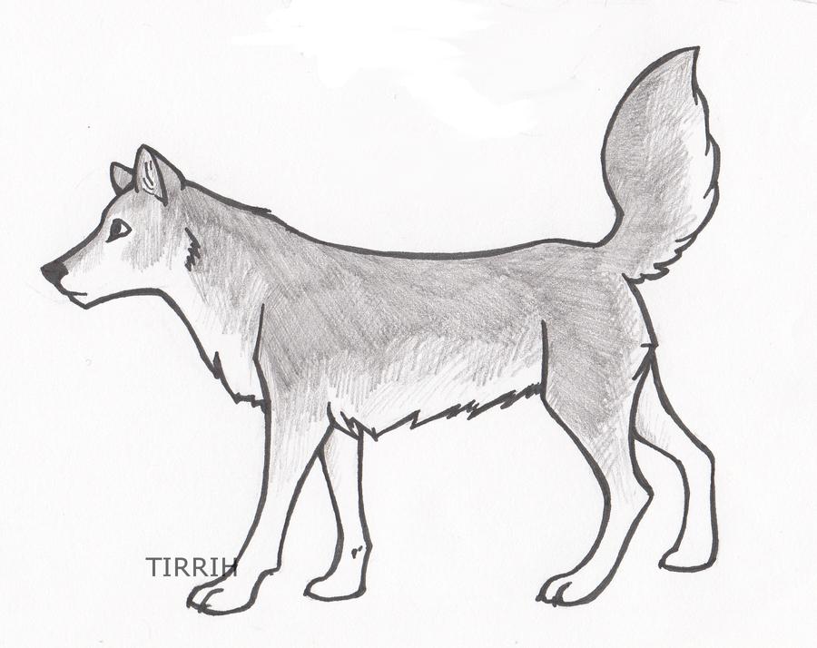 Gray Wolf By Tirrih On DeviantArt