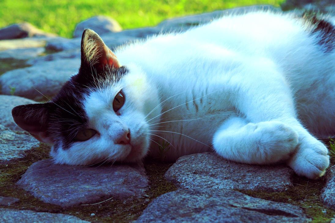 katt by always-ending-story