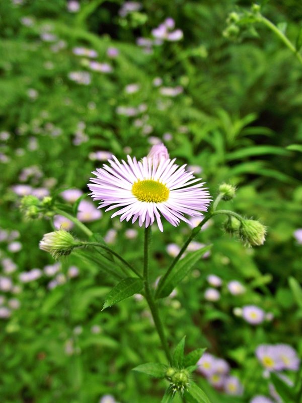Wildflower III by cjosborn
