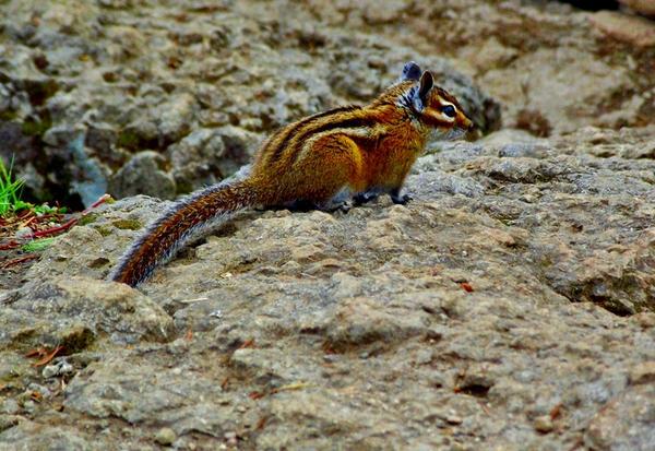 On The Prowl by cjosborn