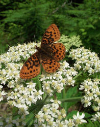 Butterfly by cjosborn