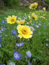 Wildflowers by cjosborn