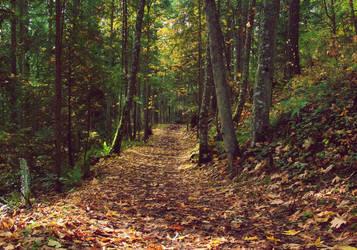 Autumn Trail by cjosborn