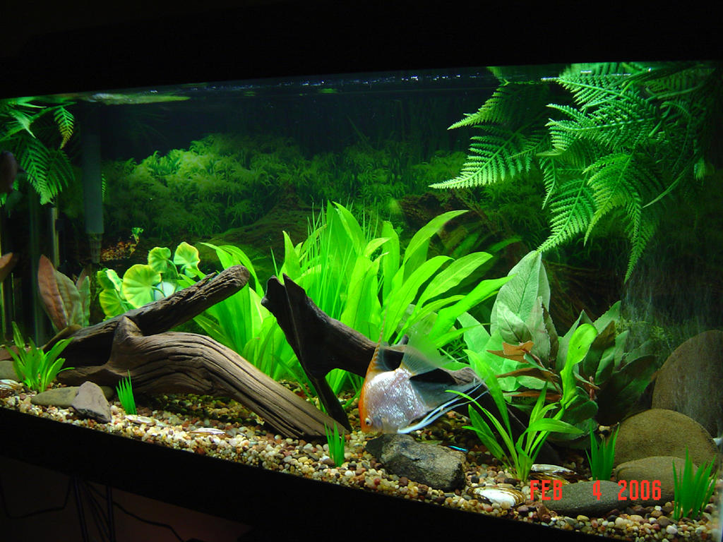 30 gallon planted tank by isabellany on deviantart for 30 gallon long fish tank