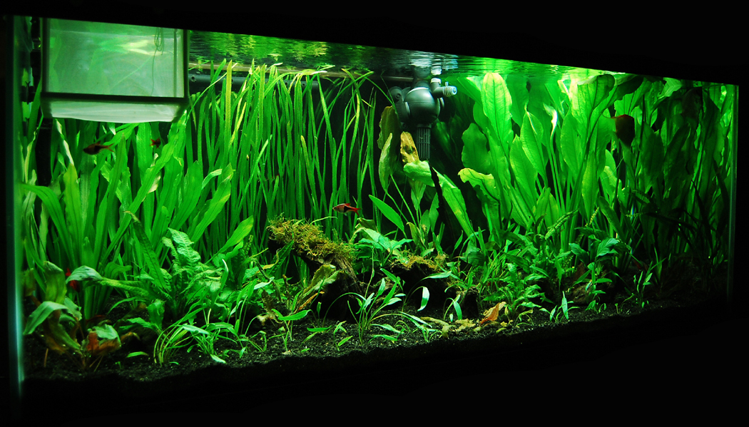 75 gallon planted tank 3 by isabellany on deviantart for 55 gallon fish tank size