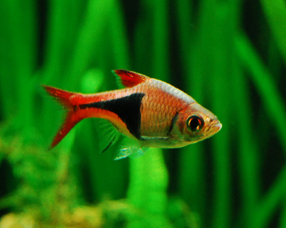 Can A Male And Female Betta Live Together In A 29 Gallon