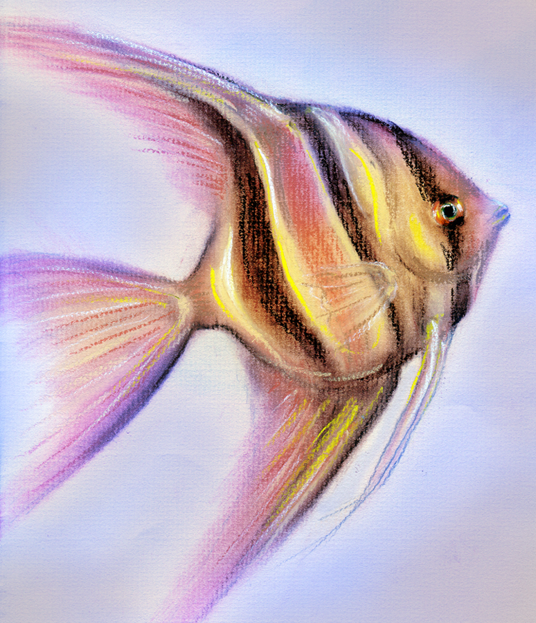 Angelfish Drawing by I...
