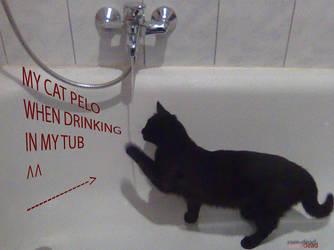 CAT DRINKING 1