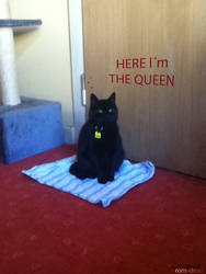 here I m the queen