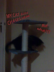 my cat just chases here