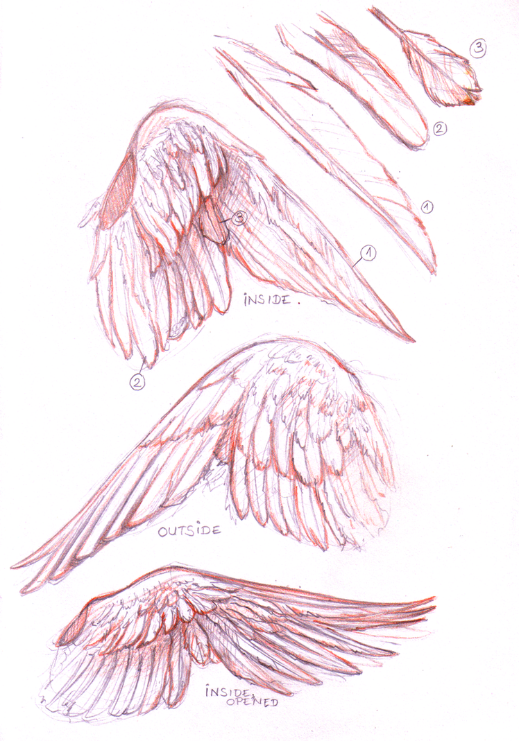 A Wing Study by Shotechi