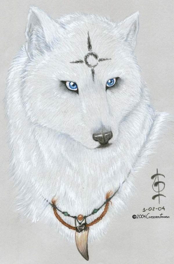 beautiful blue white wolf - photo #31
