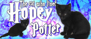 Hopey Potter