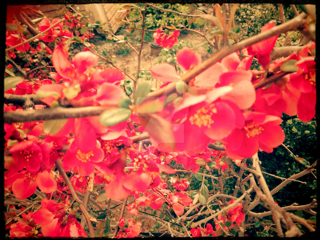 lovely pink by gabypandea24