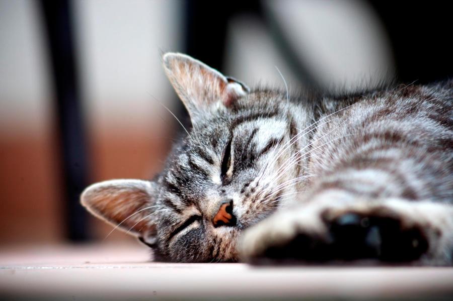 sleeping by Keischa-Assili