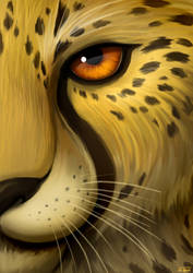 Cheetah by jrtracey
