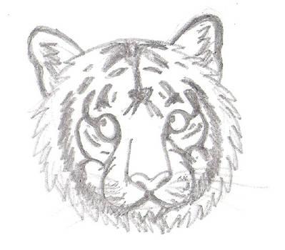 Tiger rawr