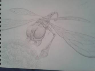 dragonfly by ihsnetonoruk