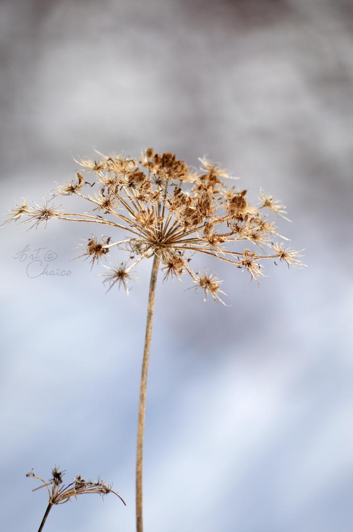 hiver de fleur by chaico on deviantart