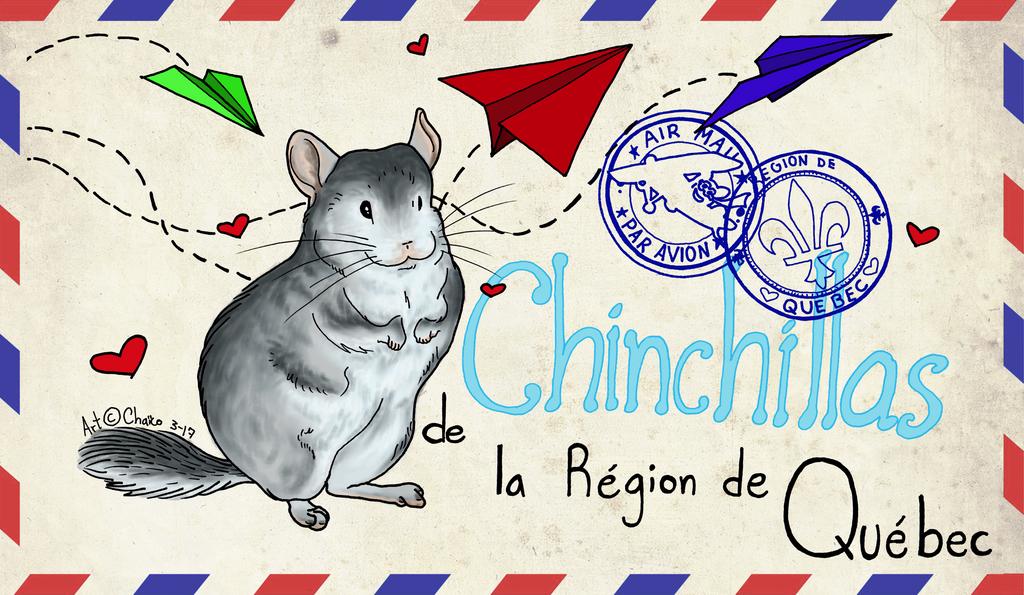 Chinchillas de la region de Quebec by Chaico