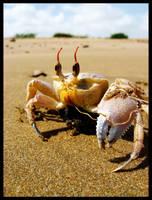 Mr. Crabs by scorpion2kpk