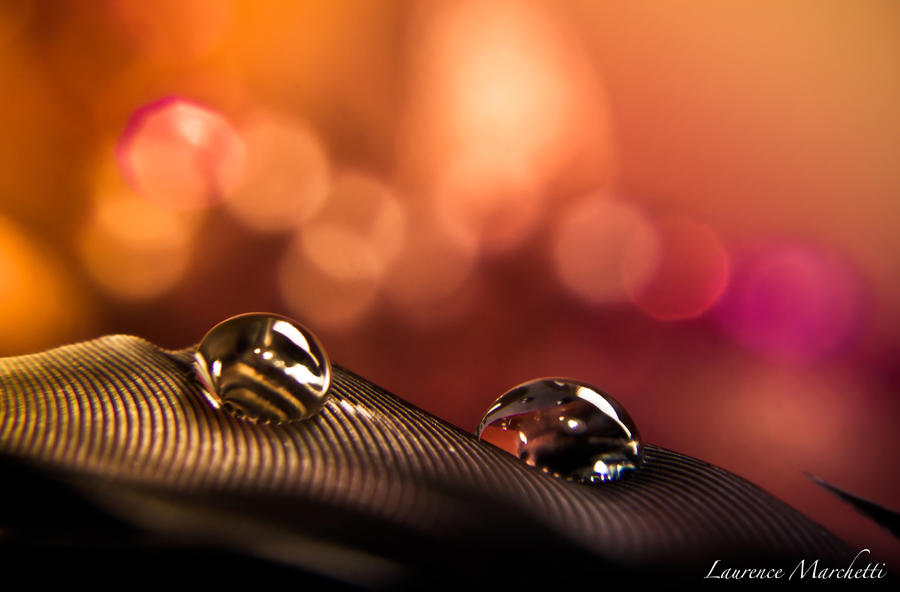 Drops by Gallynette
