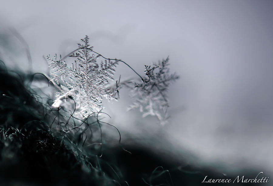 Snowflake by Gallynette