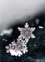 Snowflake 5 by Gallynette