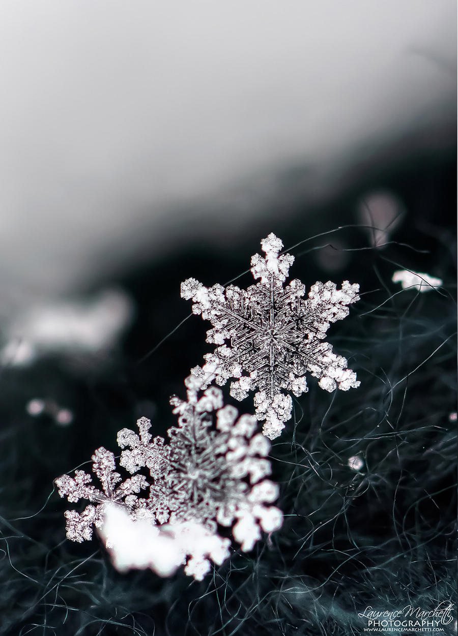Snowflake 5 by Gallynette