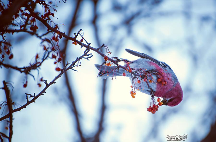 Winter treat by Gallynette