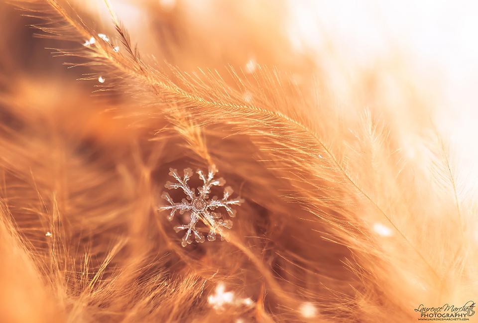 Warm Winter by Gallynette