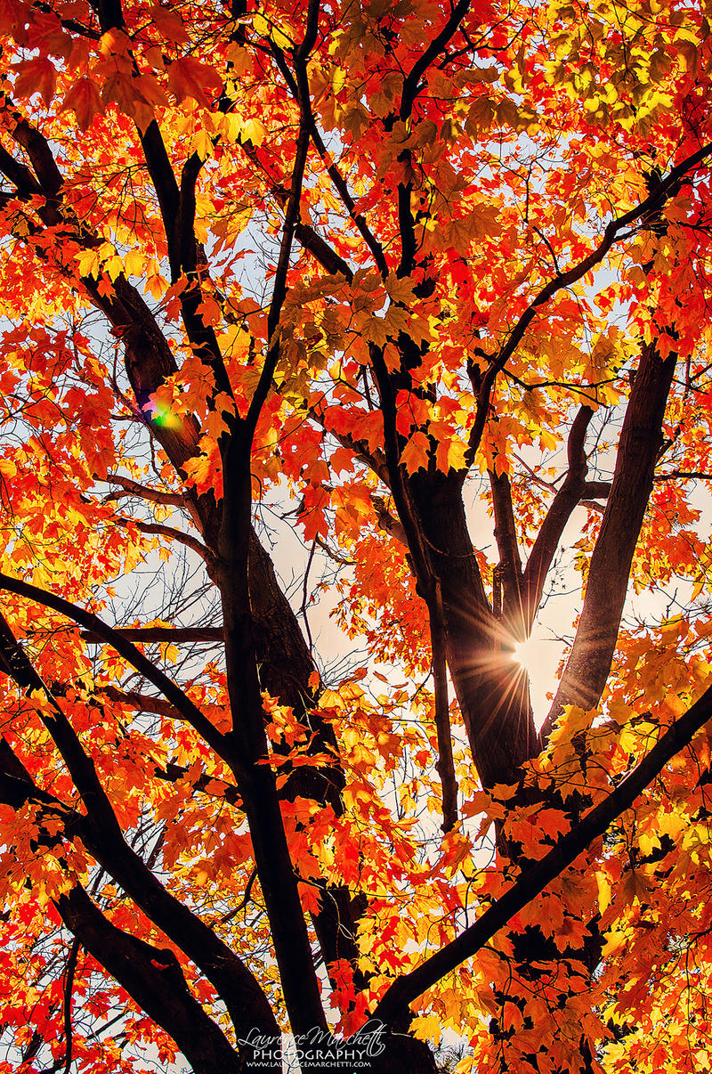 Colors of autumn by Gallynette