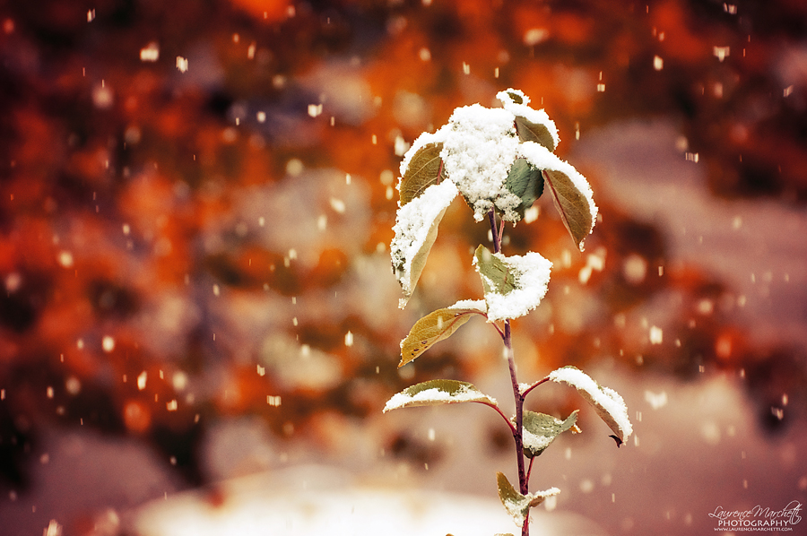First snow by Gallynette