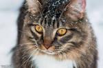 Snow cat by Gallynette