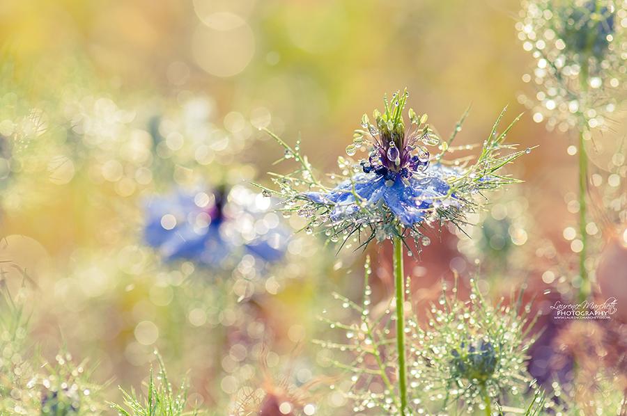 Fairyland by Gallynette