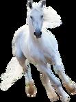 Render white horse