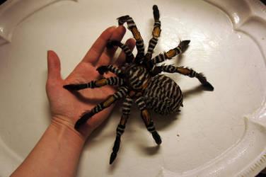 Tarantula - handmade