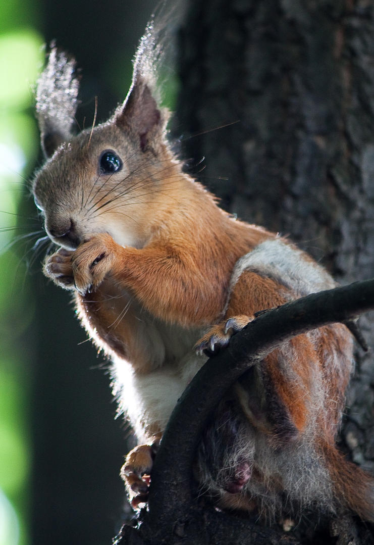 squirrel by Malicious25
