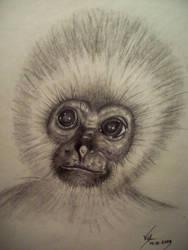 Monkeyface by boy140495