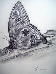 Butterfly five by boy140495