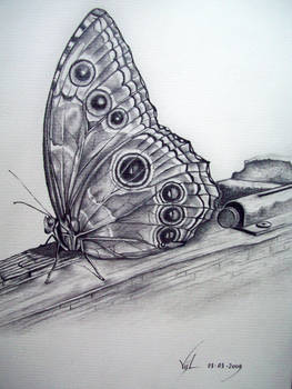 Butterfly five