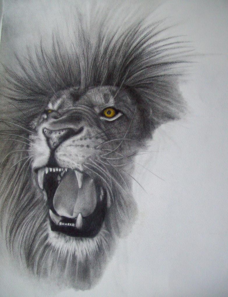Simple lion drawings in pencil