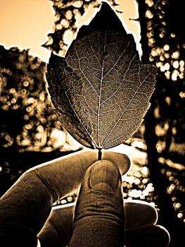 Leaf..