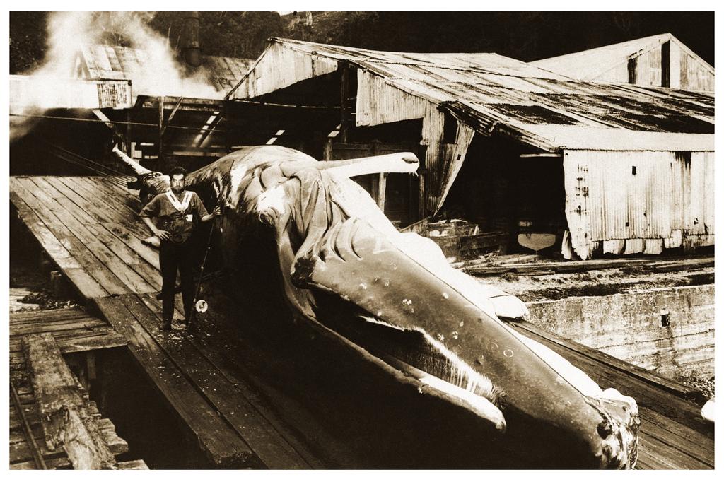 http://fc07.deviantart.net/fs71/i/2013/087/0/e/great_explorer_vi__innsmouth_whaling__by_vonmeer-d5zmv75.png