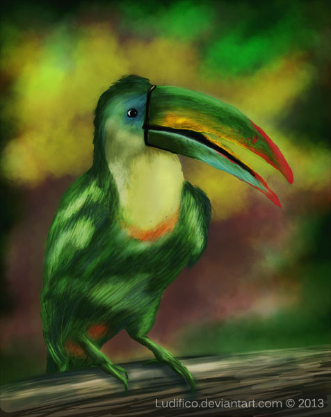 Rainbow Toucan by Ludifico